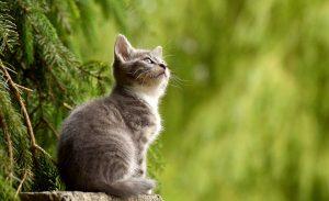 Il y a de plus en plus de chats identifiés en France