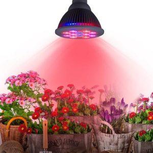 La LED pour l'éclairage horticole stimulée par de nouveaux produits